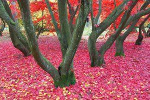 jesień w arboretum w Rogowie